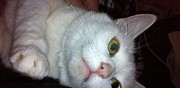 2 chattes � donner s�par�ment ou ensemble gap