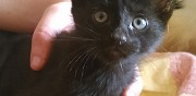 Donne 3 adorables chatons nieul l�s saintes