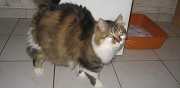 2 chattes � adopter ermont