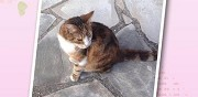 Deux chats � adopter ermont