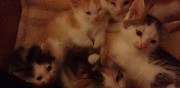 Donne chatons toulouse