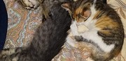 A donner deux chatons manosque