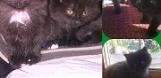 2 adorables chatons � adopter crisolles
