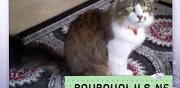 Chat de 3 ans � adopter ermont