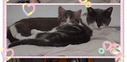 Chatte et son chaton � adopter sannois