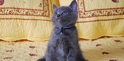 Vends chatons chartreux marseille