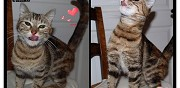Chatte extra � adopter sannois