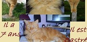 Chat roux � disparu ladignac le long
