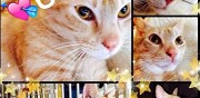 Chat � adopter tr�s urgent avant abandon ermont