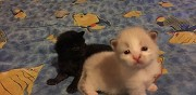4 chatons à donner fin septembre stains