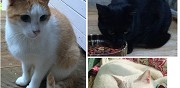 3 chats en don saint ouen l'aumone