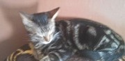 Donne chaton troyes