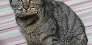 Donne jeune chatte 6 mois charly