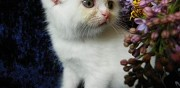 Adorable chaton  donner paris