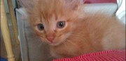 Adorables chatons � donner montpellier