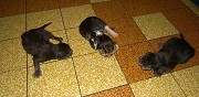 3 chatons � adopter vendrennes