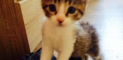 Chatons a l'adoption le havre