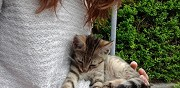 Donne chaton abandonn� ronchin