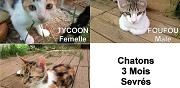 Donne chatons carcassonne