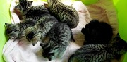 7 chatons � adopter dieppe