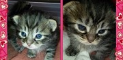 5 merveilleux chatons � adopter ermont