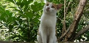 2 chatons � donner le port marly