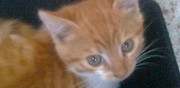 2 chatons adorables � donner aizenay