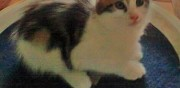 3 chatons fr�res � adopter ermont