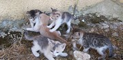 Donne 5 chatons couloum� mondebat