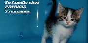 2 chatons tigr�s blancs disponibles � l'adoption ermont