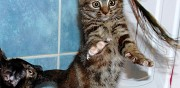 Adorable chaton � adopter sannois