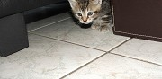 Donne chaton m�le connantre