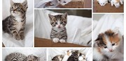 7 chatons � donner montfaucon