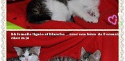 2 chatons mimis � adopter sannois