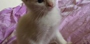 Chatons � donner drancy