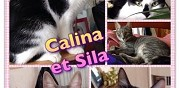 2 petites chattes � sauver colombes