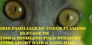 Elevage scottish highland fold et british short hair arneke