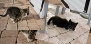 Donne chatons poitiers