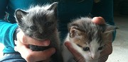 Donne chatons albi