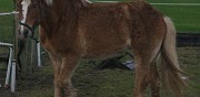 Vends double poney pithiviers