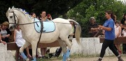 Pensions cheval � la carte marguerittes