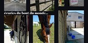 Pension chevaux brest