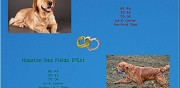 Chiots golden retriever lof � r�server signy le petit