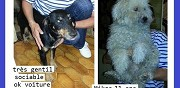 Chien type jack terrier � adoptertoulouse