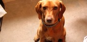 Donne chienne affectueuse bourges