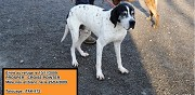 Crois� pointer � adopter mornac