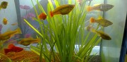Don platy corail m�le angers