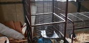 Vends 5 chinchillas pont sur sambre