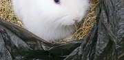 Vends lapin nain m�le er cage accessoires stains